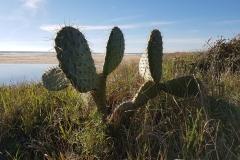 Kaktus am Strand